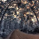 Track to Shelly Beach by BigAndRed