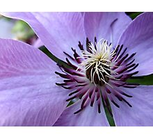 I think I need Clematis Photographic Print