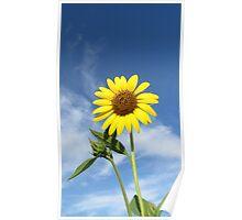 Bush Sunflower Poster