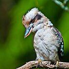 Kookaburra at Sherbrooke Forest III by Tom Newman