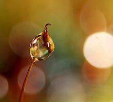 Rainbow Moss Drop by Sharon Johnstone