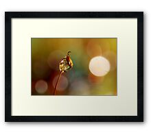 Rainbow Moss Drop Framed Print