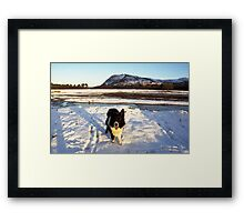 Indy on Christmas day Framed Print