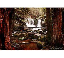 Tall Tree National Park Photographic Print