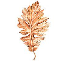 Oak leaf Photographic Print