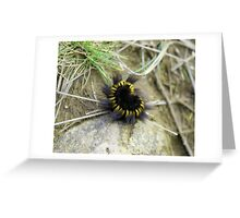 Fuzzy Stripy Caterpiller - Photography Greeting Card