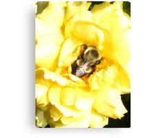 A Bummble Bees Nap Canvas Print