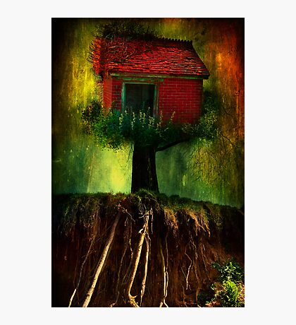 Red House In A Tree Photographic Print