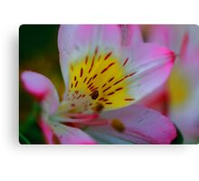 Single Lily Canvas Print