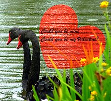 Could You Be Mine... Swans - NZ Valentines Card by AndreaEL