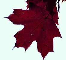 Fall in Wisconin by vanessb1993