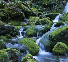 Mossy Merlin Creek by martingilchrist