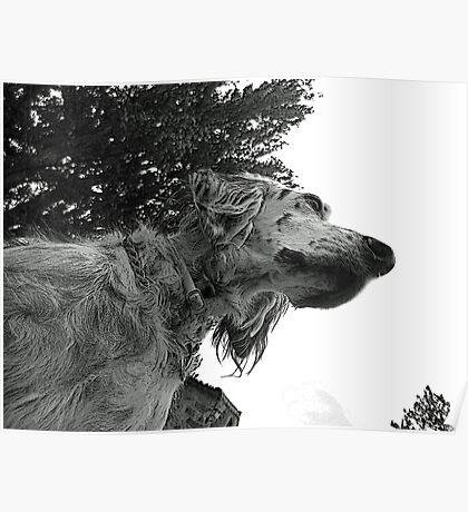 Alert dog Poster