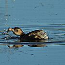Little Grebe by Russell Couch