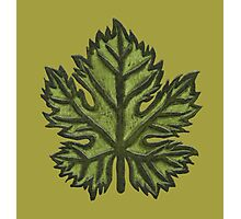 Green Leather Grape Leaf - Leaves, Vineyard, Wine, Dionysus, Bacchus, Grapevine Photographic Print