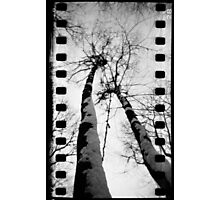 Giraffe Trees at Mount Misery - Lincoln, MA Photographic Print