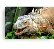 Green Iguana Canvas Print