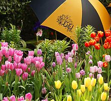 Under the umbrella by Cathy van Enckevort