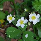 Wild Strawberry by Leah wilson
