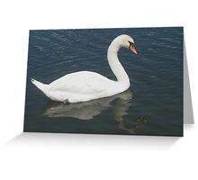 Swan symmetry Greeting Card
