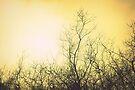 As dusk begins, the sky turns yellow by Joshua Greiner