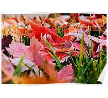 Fallen Leaves - Bonney Lake, WA Poster