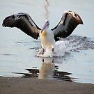 Pelican! by KiriLees