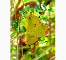 Yellow Sulphur Butterfly Pair Unisex T-Shirt