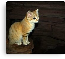 """Is This Pose Good For You"" (Sand Cat) Canvas Print"