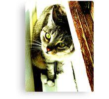 Green Eyed Feline Canvas Print