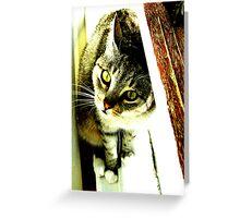 Green Eyed Feline Greeting Card
