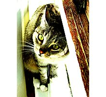 Green Eyed Feline Photographic Print