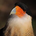Crested Caracara by naturalnomad