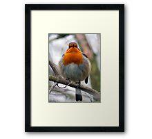 Plump Robin! Framed Print