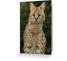 Serval Portrait Greeting Card
