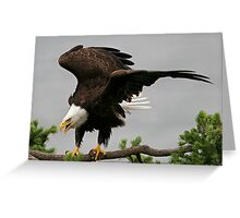 Just Landed Greeting Card