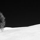 Winter solitude by Francesco Malpensi