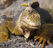 Lizard - Galapagos Islands, Ecuador by suellewellyn