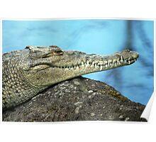 American Crocodile (Crocodylus actus) - Costa Rica Poster