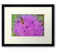 Sitting on a thistle Framed Print