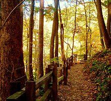Crabtree Falls - Autumn  ^ by ctheworld