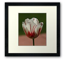 Filtering The Light - Featured Photo and Challenge Top Ten  Framed Print