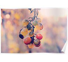 Racimo de uvas Poster