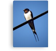 Swallow taking a rest Canvas Print