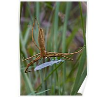 Hunting Spider With Catching Net Poster