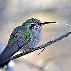 Toungue Out Hummer by Judy Grant