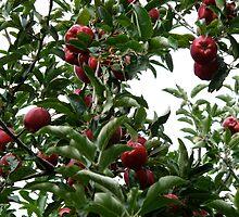 Apples of my eye by MarianBendeth