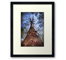 The Majestic Mountain Ash Framed Print