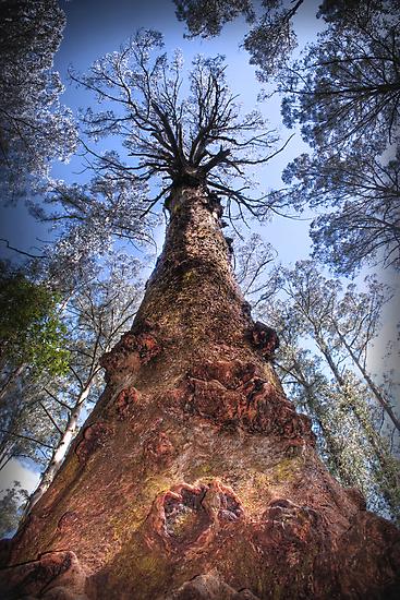 The Majestic Mountain Ash by John Bullen