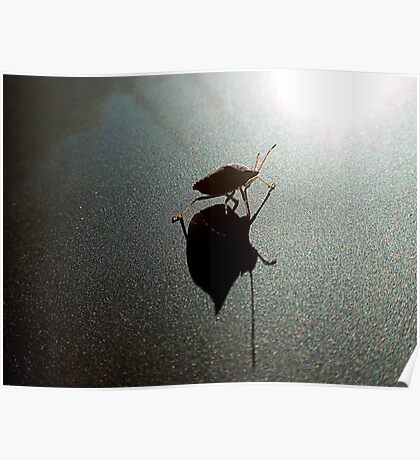 A Bug And His Shadow Poster